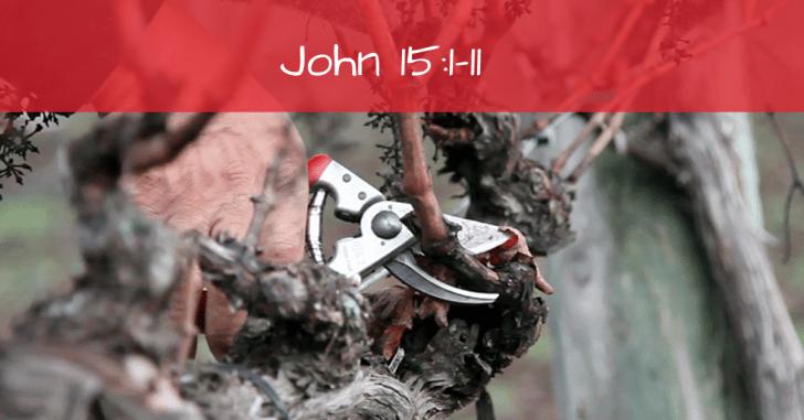 John 15:1-11 | Vine, Vinedresser and Branches